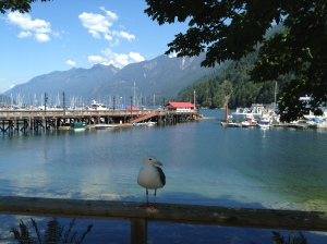 Horseshoe Bay Seagull's View Copyright Shelagh Donnelly