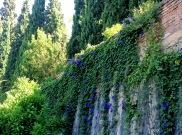 Granada 2014-2636 Copyright Shelagh Donnelly