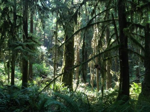 Sunshine Coast Forest 183 Copyright Shelagh Donnelly