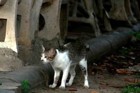 Lumpini Park Cat 8684-2016 Copyright Shelagh Donnelly