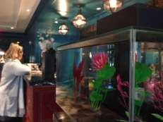 Hotel Monaco Alexandria Fish Tank Copyright Shelagh Donnelly