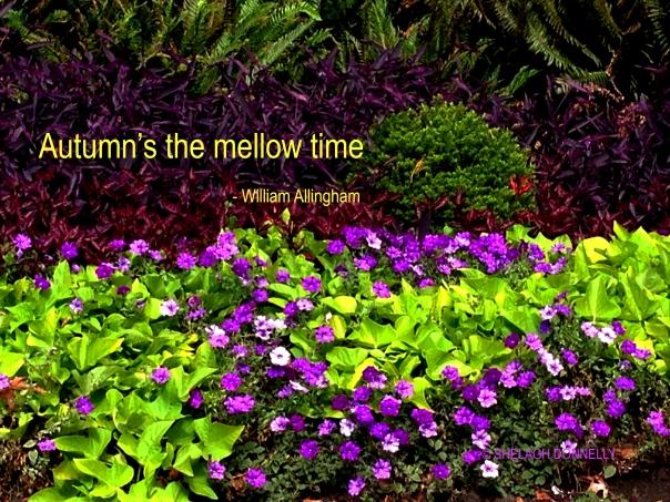 west-end-garden-copyright-shelagh-donnelly