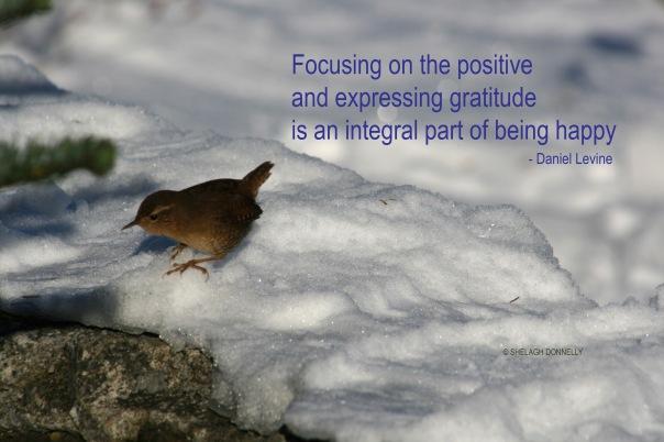 winter-bird-16-2416-copyright-shelagh-donnelly